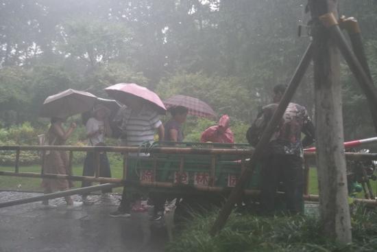 北山路曙光路口,多名工作人员仍在雨中对树木进行加固