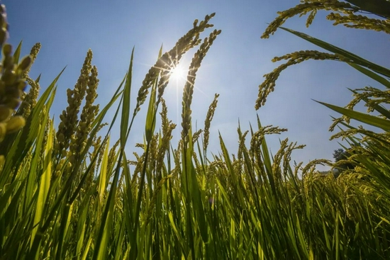 浙江出台意见保障农业发展 保险密度达500元每人