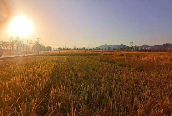 杭州又一个湿地公园开园了 有156个足球场那么大