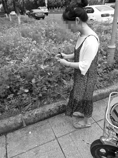 世纪大道上采花的市民。
