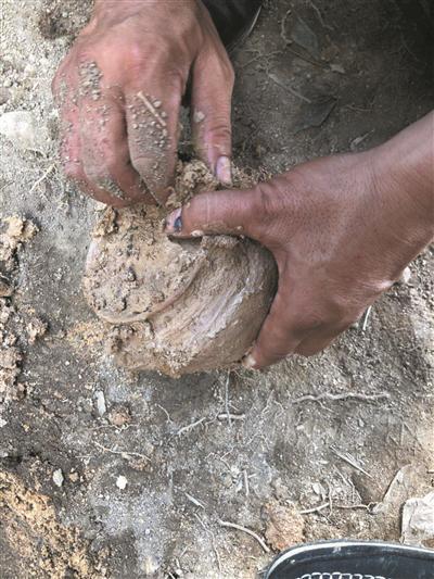 现场挖掘出来的陶罐 陈光强 摄