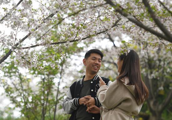 图为:游客徜徉于樱花林下,欢乐而惬意。王刚 摄