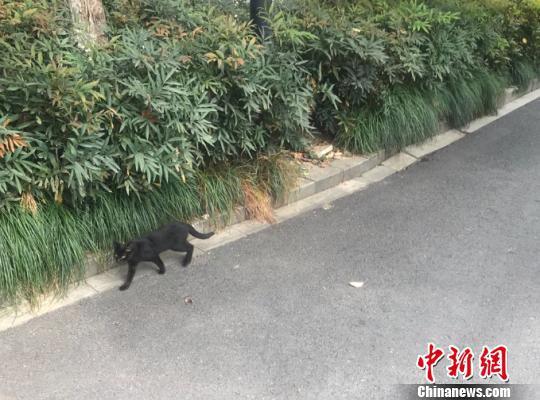 杭州某小区内的流浪猫。(资料图) 张斌 摄