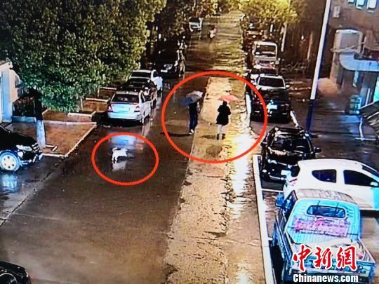 金华一对夫妻偷车后消失踪影 没想到被爱犬出卖住址