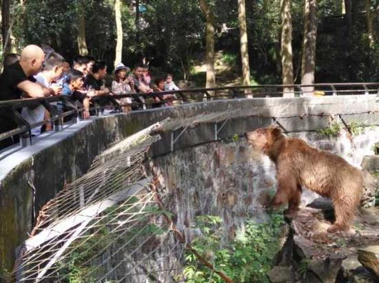 """(上图:杭州动物园,棕熊看呆了:""""我可以一口气看到那么多人啊!今天肯定是个好日子。""""江先生 摄)"""