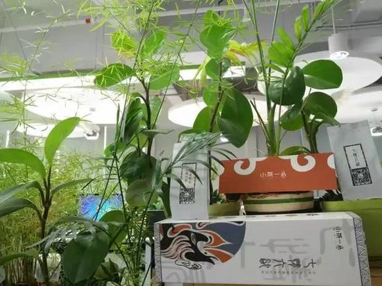 秋云的办公桌,植物葱郁