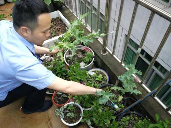 民警在铲除罂粟
