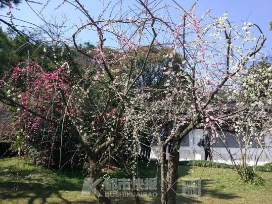 (图片由杭州植物园提供)