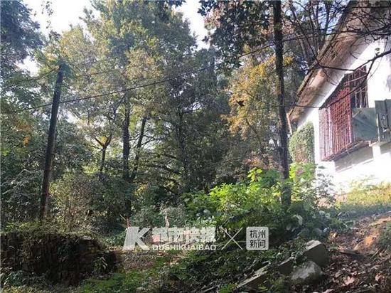 杂草丛生注册新宝GG旧宅前院,连石阶都无章乱放着