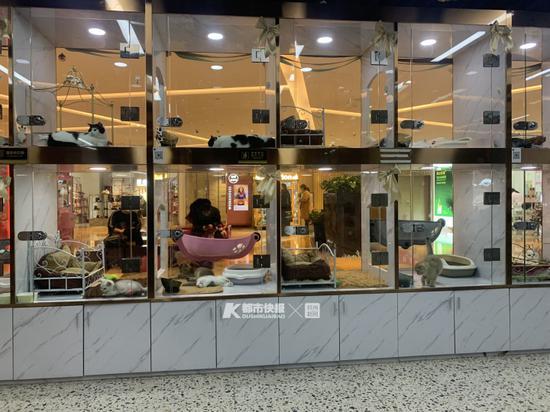 这是一家猫咖和宠物零售店的结合体 摄影 | 楼金靖