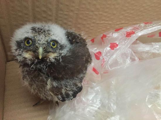 宁波市民捡到大眼萌货 经鉴定为国家Ⅱ级保护动物