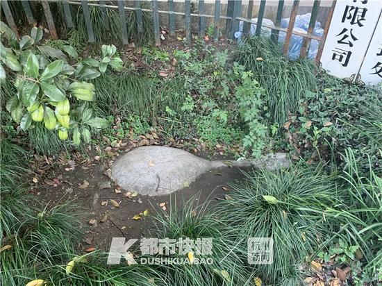 杭州话版童谣瓢羹石出炉 勾起不少老杭州人的回忆
