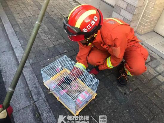 家里4只仓鼠被蛇吃了3只 杭州市区消防叔叔帮忙抓蛇