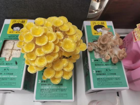 浙江一妈妈下单10盒蘑菇盲盒做六一礼物 寓教于乐