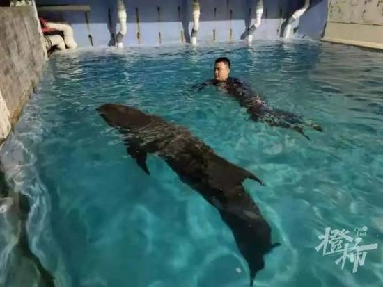 临海救起瓜头鲸凌晨死亡 瑞安搁浅须鲸也遗憾死亡