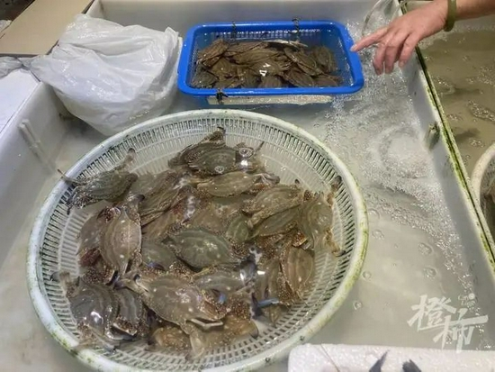 舟山梭子蟹上市杭州 蟹肉肥美价格实惠适合夏日食用