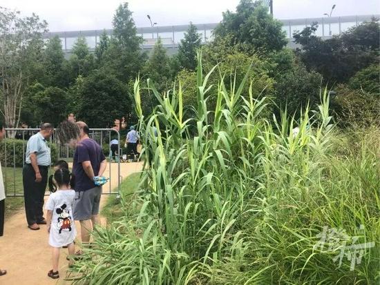 杭州一公园管理房起火 屋内两人遇难警方正在调查