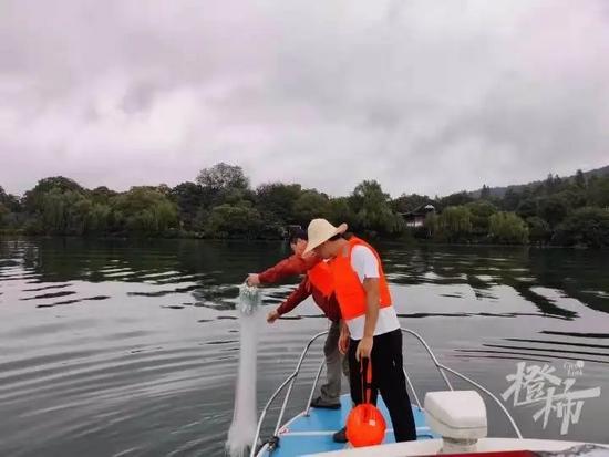 杭州西湖里养了多少种锦鲤 首次大规模调查开展