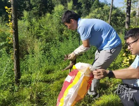 淳安一农户家出现国家三有保护动物 经鉴定为鼬獾