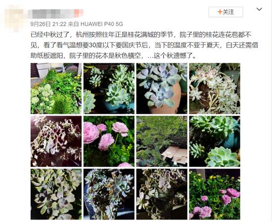 都到9月底了 杭州的桂花怎么一点消息都没有呢