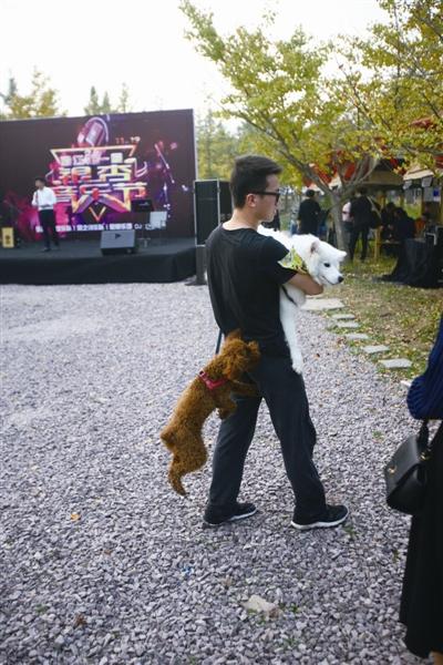 泰迪犬扑向萨摩耶犬,主人只能将爱犬抱起来避免冲突。