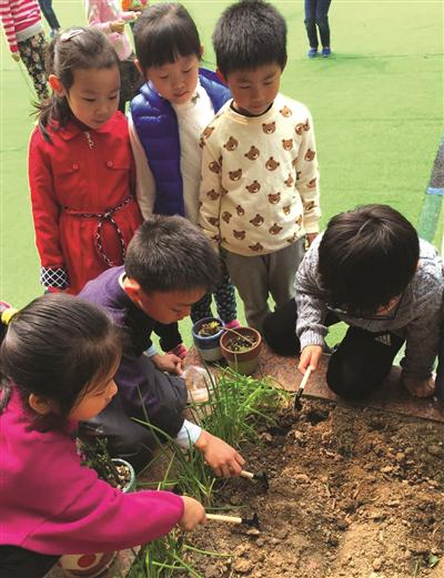 浙江大学幼儿园玉泉分园大班的孩子们,在校园的一角种下各种植物,期待着它们茁壮成长。 摄影 何亚英