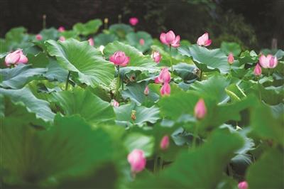 杭州这一周雨水暂时不肯歇 可能出现短时强降雨