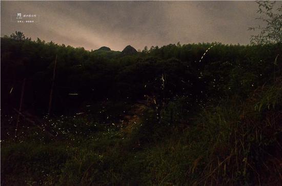 7月14日晚,记者在衢州药王山观察并拍摄到大量的萤火虫在夜晚出没。
