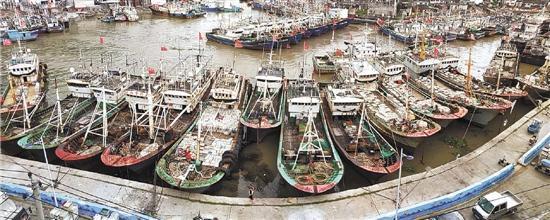苍南龙港舥艚社区码头,出海作业渔船全部归港避风。