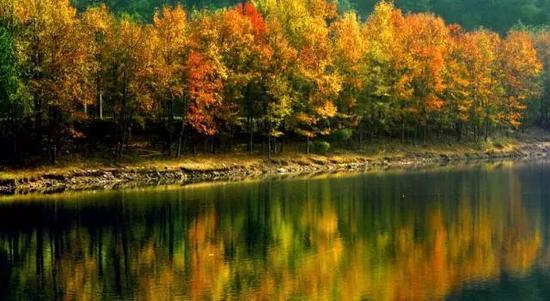 温州率全国地市之先 把森林旅游玩出新花样(图)