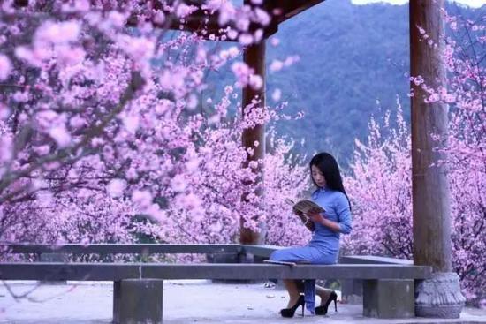永嘉红梅观光休闲园