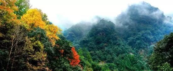 瑞安花岩国家森林公园