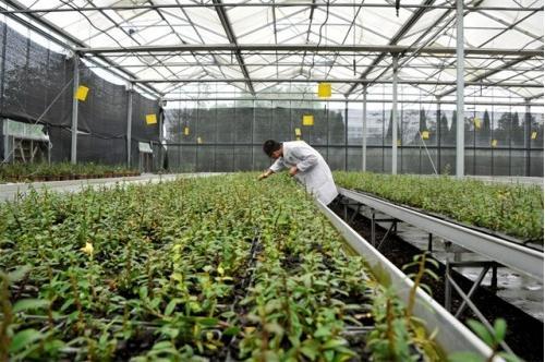 图:森山铁皮石斛原生态栽培基地