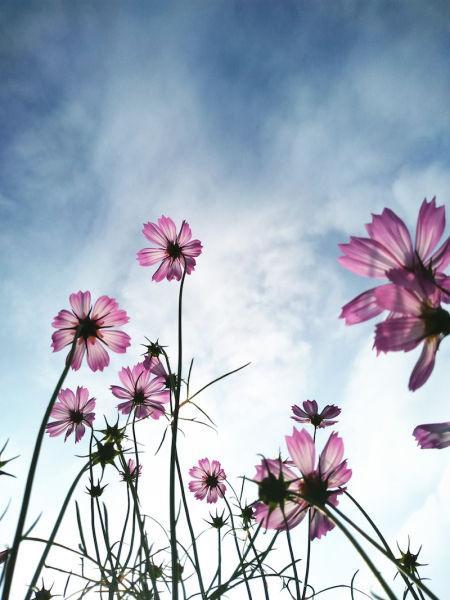 黄色、蓝色、紫色、白色的花朵在风中摇曳,美轮美奂 詹坚宇摄