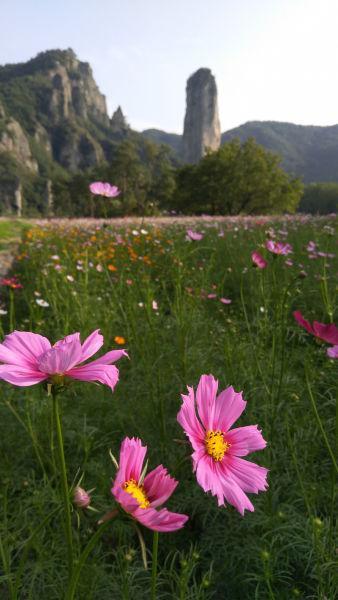 绚烂的花海与远处的鼎湖峰景观相得益彰 詹坚宇摄
