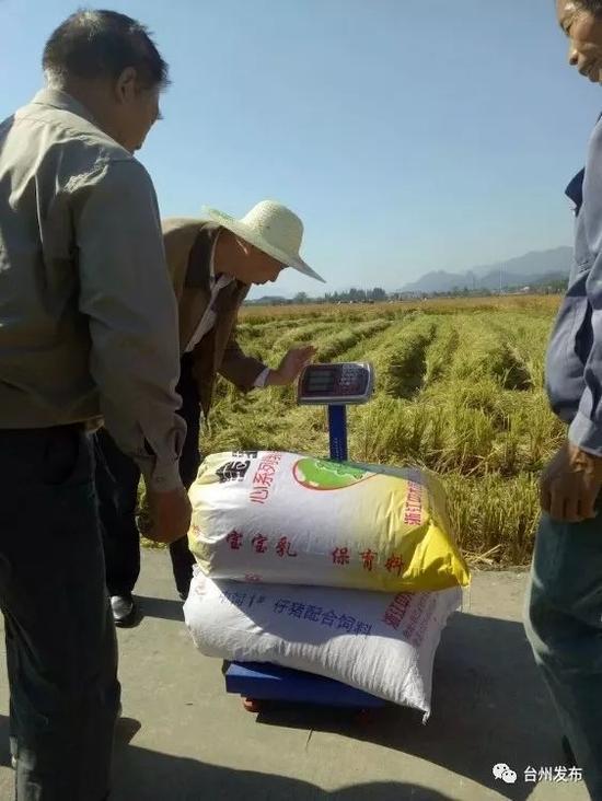天台水稻高产之路