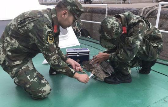 图为:边防官兵给夜鹭消毒。 邹训永 摄