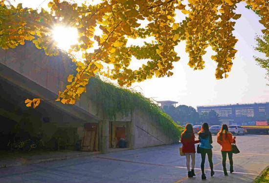 校园秋色。  王国海 摄