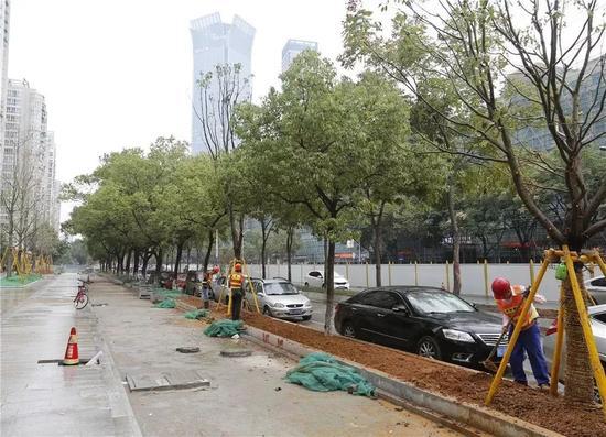 ▲锦绣路吴桥路路口分车带绿化施工中。 朱永春/摄