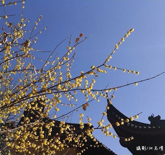 这个四九不太冷 杭州将大跨步式升温未来三天升20多度