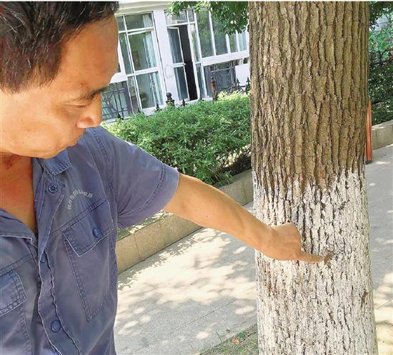 杭越来越利于白蚁繁殖 不少小区告急