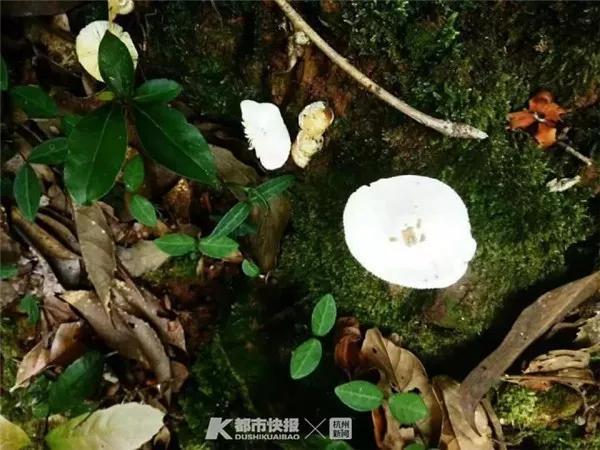 """徐太太拍摄的""""小白菇"""" 医院供图"""