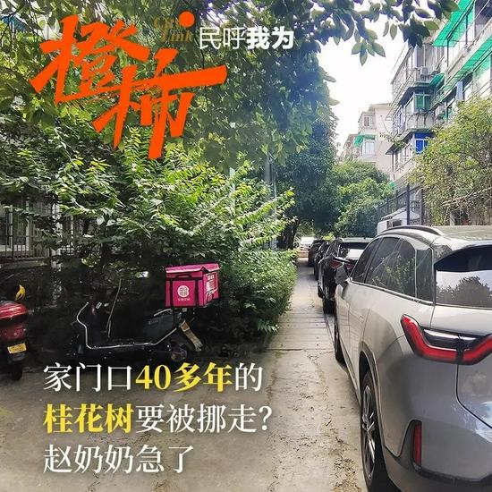 杭州老旧小区为消防安全挪树扩空间 居民担心安全问题