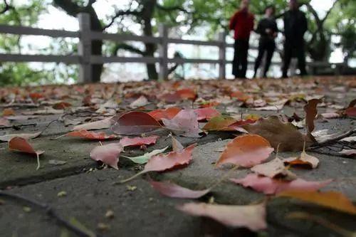 在华盖山看落叶