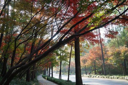 图为深秋杭州西湖边的灵隐路。唐吉娜 摄