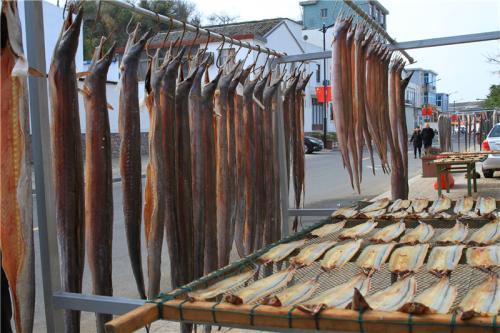 图为峡山渔村晾晒的风鳗 吴立高 摄