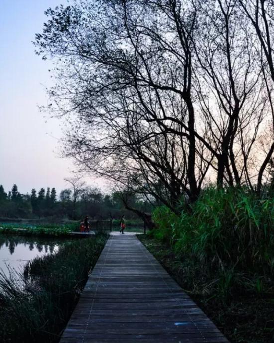 图片来源:西溪湿地