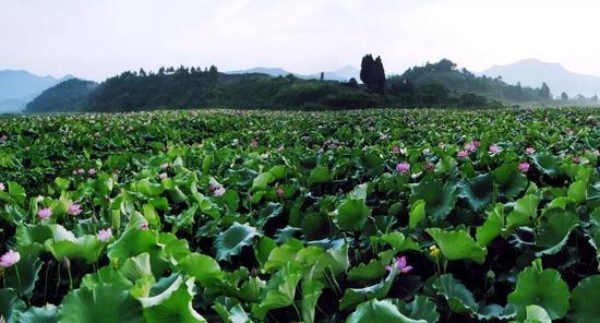 """浙江""""最美田园""""休闲农业与乡村旅游精品线路出炉"""