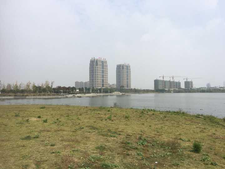 龙渡湖公园二期环湖大草坪有不少粪便