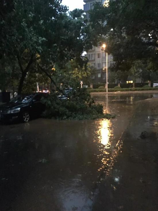 绍兴世茂广场附近,一棵树的树枝被风刮断掉在车边。